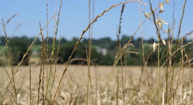 El cambio climático aumenta el riesgo de sequías severas en España